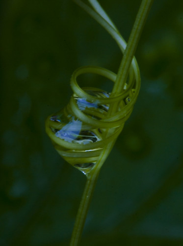 caged water droplet | by barbera*