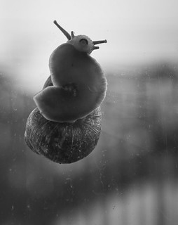 Snails don't smile | by tootdood