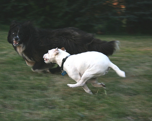 RUN BEAU!!!! | by Juli's pix