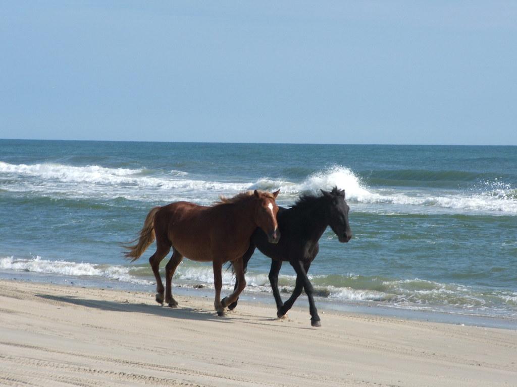 Horses explain the beach cowboy magic source sciox Images