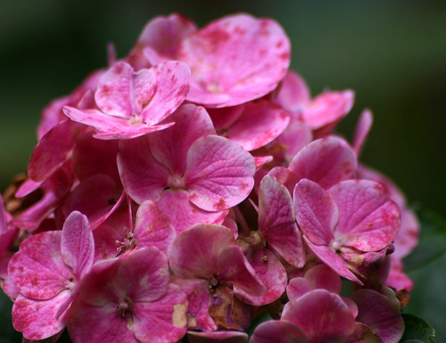 Beautiful Pink Flowers #25 | by dnldwks