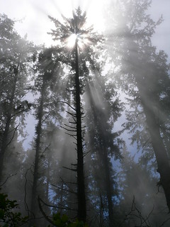 Tree and Sunbeams, Patrick's Point State Park | by Lee Edwin Coursey
