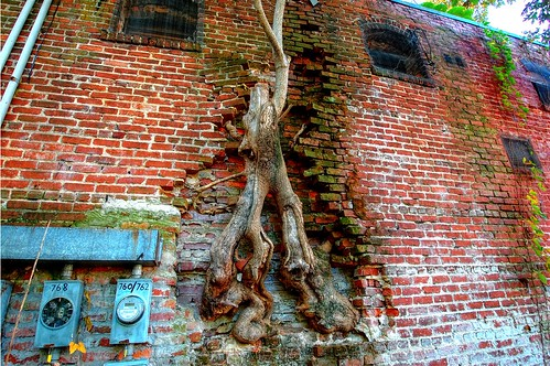 Hungry Tree, HDR | by Blancs-Manteaux