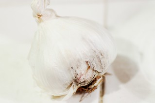 garlic | by Stacy Spensley