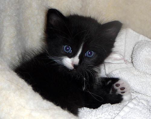 Cute Kittens And Cats Videos Yahoo