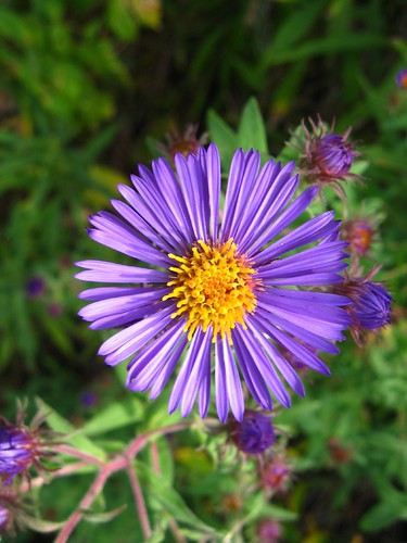 pretty purple flower/weed  september ,   liberatedmist, Beautiful flower