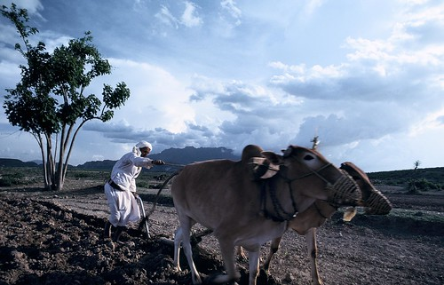 Plowing the fields | by World Bank Photo Collection