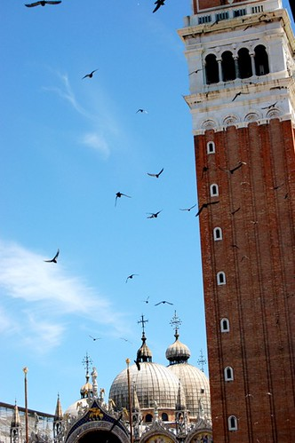 Birds! At the Belltower of the Basilica di San Marco, Venice | by Curious Expeditions