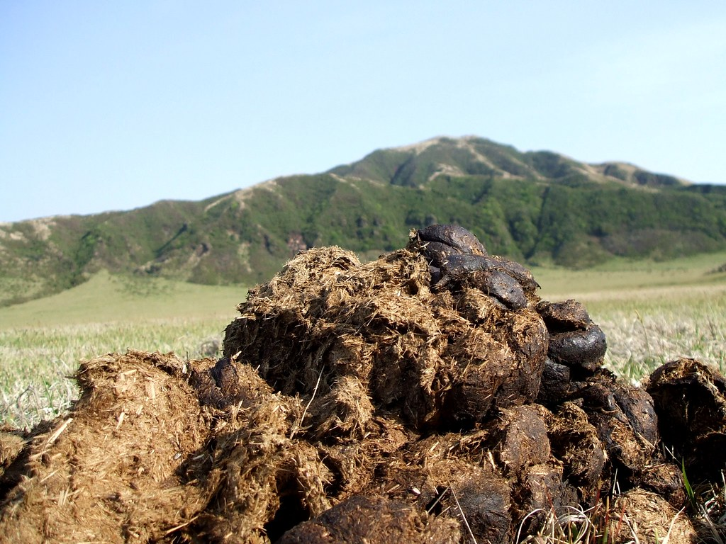 a mountain of poo there are patterns everywhere in nature st