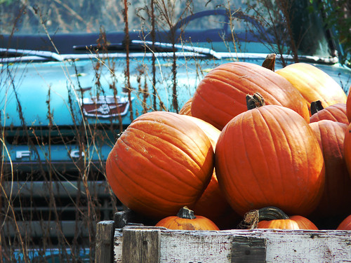 Country Pumpkins | by left wing lucy