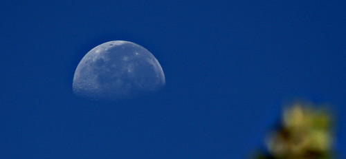 morning moon......view large !! | by jay j wilkie