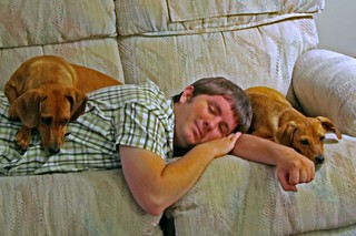 chris sleeps with dogs | by gotshoo
