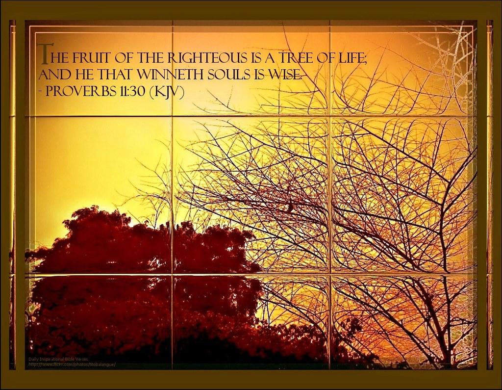29 daily inspirational bible verse proverbs 11 30 kjv flickr