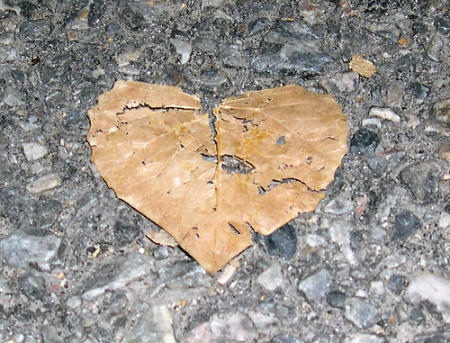 Heart of a Leaf | by A Small Snapshot