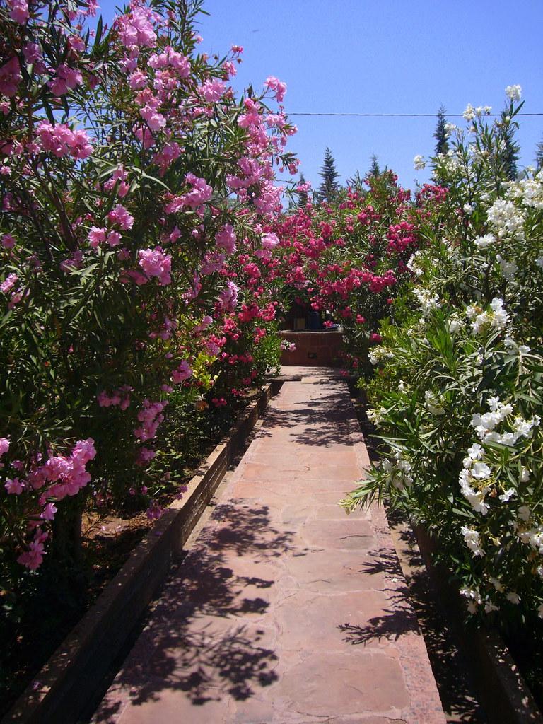 Jardin Bio Aromatique De L Ourika Levercusec Flickr