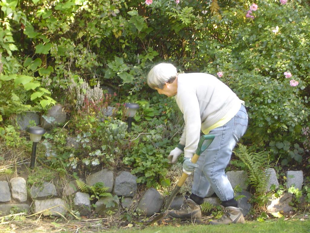 Grandma Gardening   By Rob_halliday6655321 Grandma Gardening   By  Rob_halliday6655321