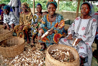 Cassava processing, a source of employment to Nigerian women | by IITA Image Library