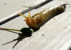 The High Hurdles in Slug World | by Andrew E. Larsen