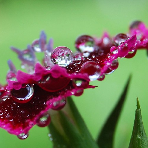 Water drops | by lisajacob
