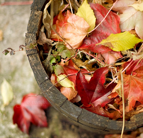 Autumn pot | by Sylvia Rueda