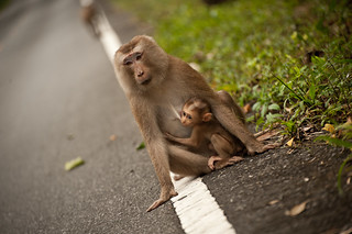 Mama and Baby Monkey | by goingslowly