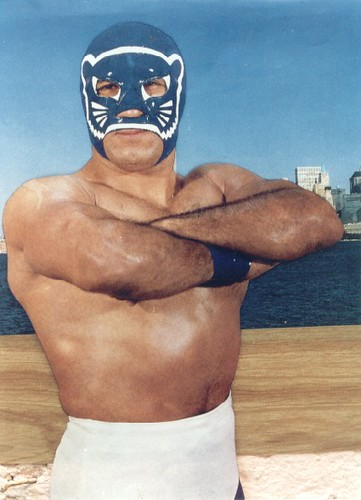 Image result for Blue Panther luchador