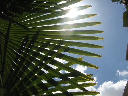 sun view through a palm tree leaf | by MadalenaPestana