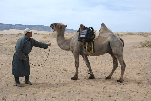 voltaic backpack on camel in gobi desert | by this is emily
