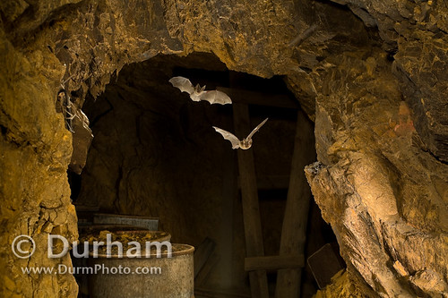 Bats in abandoned mine | by Michael Durham
