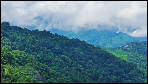 Misty Mountains - Munnar | by flickrPrince