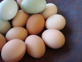 january eggs | by jenny lee fowler