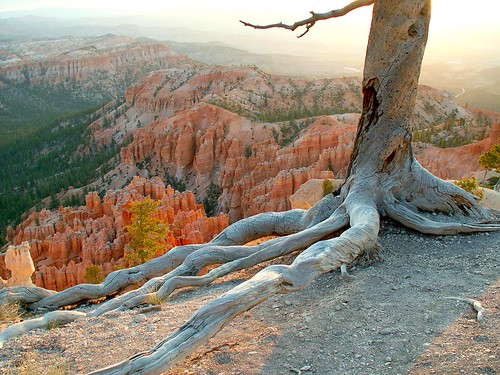 Tree overlooking Bryce | by Stanley Zimny (Thank You for 28 Million views)