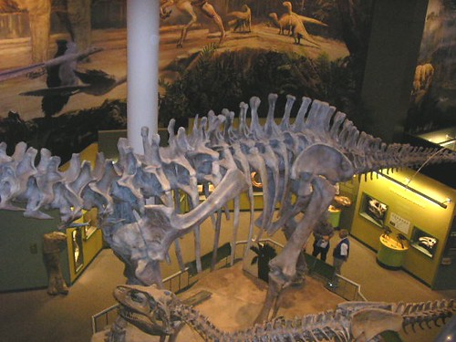 Sam Noble Museum Of Natural History Jobs