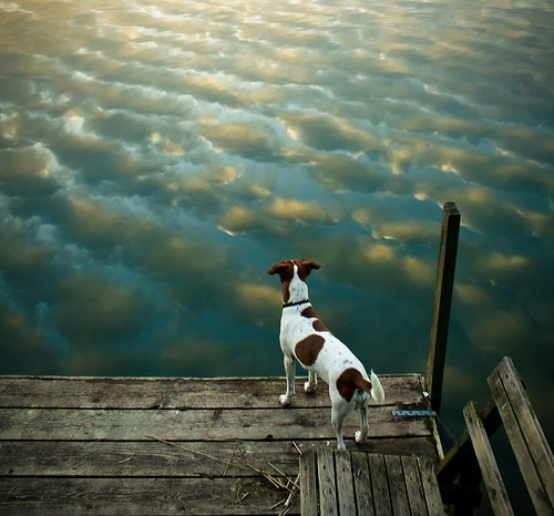 Even dogs enjoy the beautiful nature | by Voetmann
