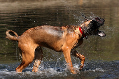 dogwaterspin | by ViaMoi