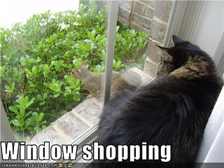 funny-pictures-cat-window-shops | by Kappy2579