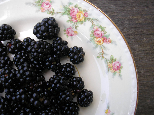 Blackberries | by life_in_sugar_hollow