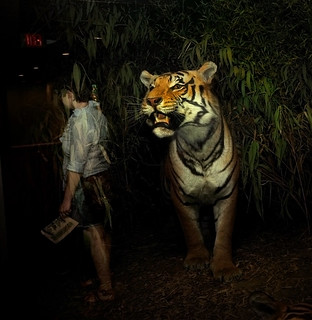 Tiger | by Traer Scott