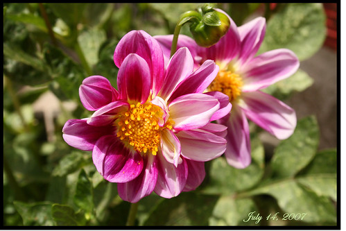 Tehachapi Mountain Flower | by RedHatGal: Barbara Butler/FireCreek Photography
