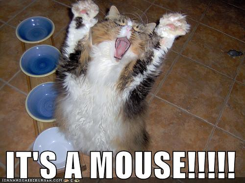 Image result for cat and mouse meme