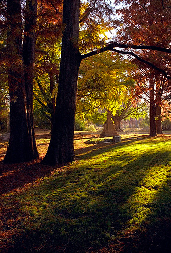 "Cincinnati - Spring Grove Cemetery & Arboretum ""Ceder Lake - Dawn Light through Cypress Trees"""