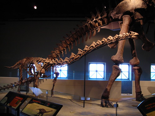 Field Museum Mother & Child (Rapetosaurus) | by Lisa Andres