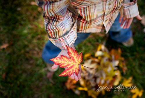 Autumn | by jesseca bellemare | photography
