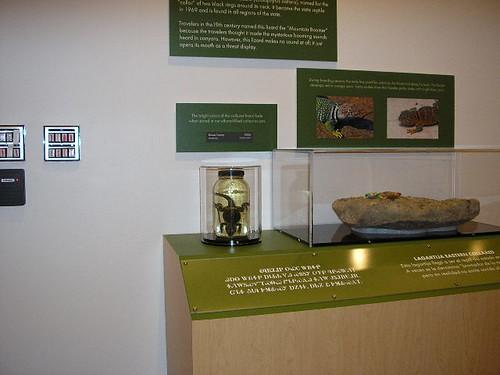Oklahoma Museum Of Natural History Jobs