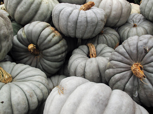 Blue-Gray Pumpkins | by mcmillend
