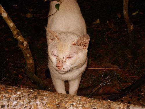 Cat Barbewue A Dog