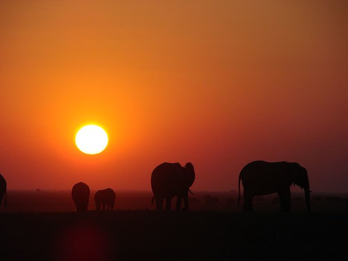 elephants at sunset | by randomtruth