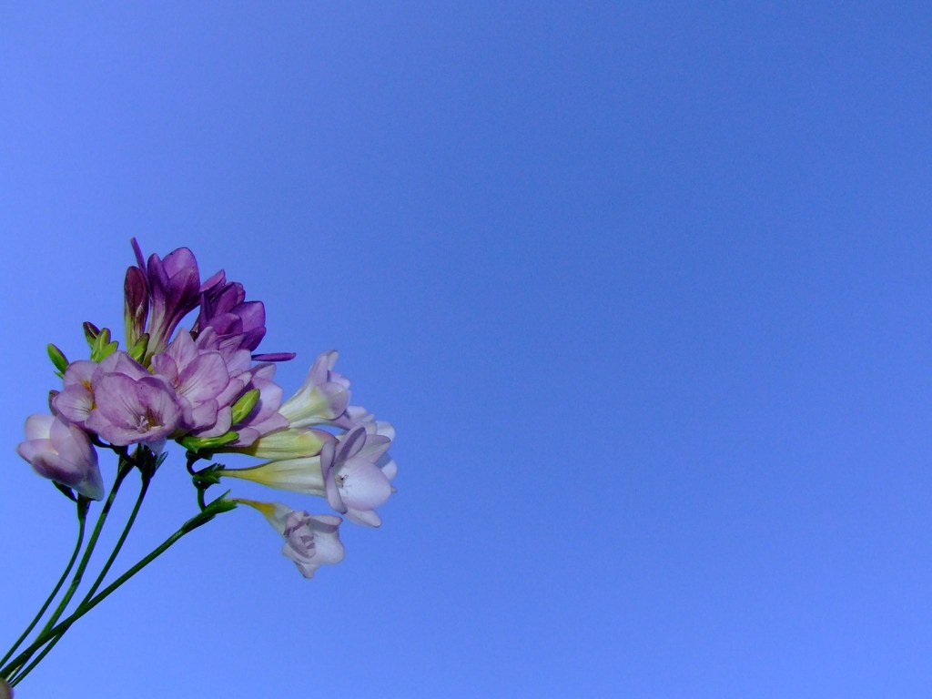 Spring Flowers Against Blue Sky Background I Have Been Sic Flickr