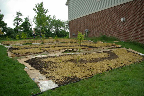 hillside foodforest with infiltration swales as pathways | by Michigan Useful Plants