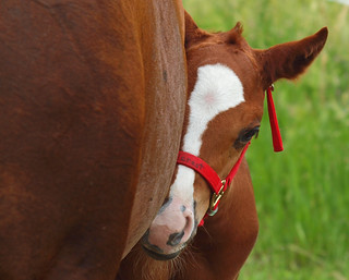 Sweet Filly | by ml_thorsteinson